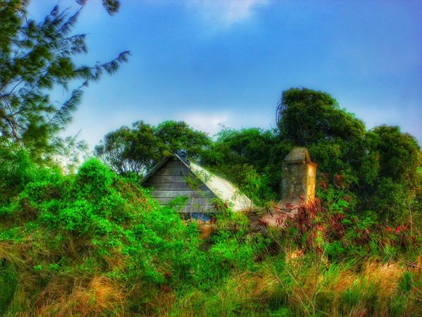 Old House Old-fashioned Old Ruin Taking Photos Nature's Diversities Green Nature Boscobell St.Peter Barbados