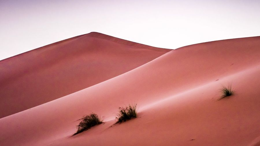 Sand Dune Arid Climate Desert Nature Sand Clear Sky Scenics Landscape Day Tranquility Tranquil Scene Low Angle View No People Beauty In Nature Sky Outdoors Tree Fresh On Market 2017