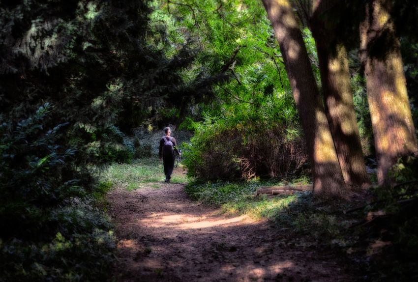 Alone Dark Dirt Road Footpath Forest Forest Path Forestwalk Leisure Activity Lost Nature Non-urban Scene Remote Shadow Shadows & Lights Shady Shady Trees Solitude The Way Forward Tree Walking Wood WoodLand
