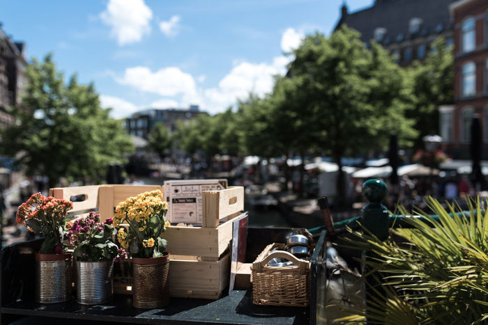 Cashier  Counter Flowers Flowers,Plants & Garden Leiden Money Counter Riverside Summer Summertime Things