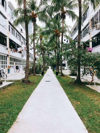 Tiong Bahru area. Singapore Tiong Bahru Architecture Building Exterior Built Structure City Day Diminishing Perspective Grass Growth Nature No People Outdoors Palm Tree Suburb The Way Forward Tree EyeEm Selects EyeEm Selects Breathing Space The Week On EyeEm