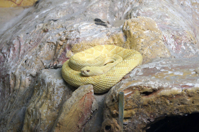 High angle view of lizard on rock in zoo