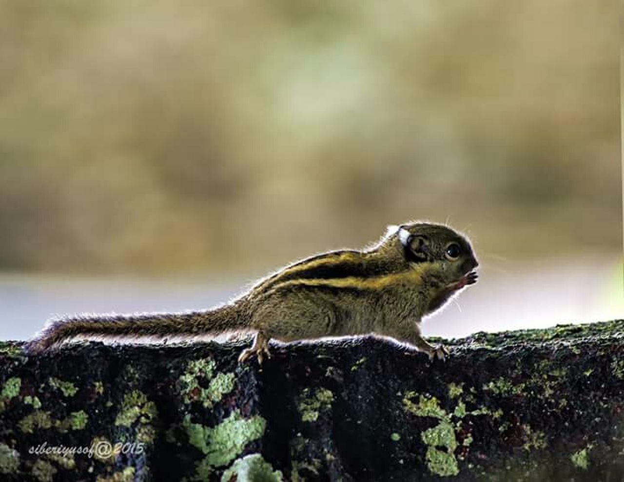 one animal, animals in the wild, animal themes, day, animal wildlife, nature, no people, outdoors, side view, close-up, mammal