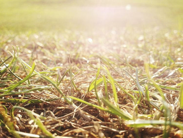 Grass Field Selective Focus Growth Close-up Leaf Drop Sunlight Season  Blade Of Grass Dew Nature Wet Plant Green Color Water Tranquility Surface Level Sunbeam Day Momo9king