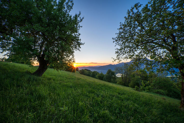 Austria EyeEm Best Shots EyeEm Nature Lover EyeEmBestPics Beauty In Nature Environment Field Grass Green Color Growth Land Landscape Nature Non-urban Scene Outdoors Plant Scenics - Nature Sky Sun Sunlight Sunset Tranquil Scene Tranquility Traunsee Tree