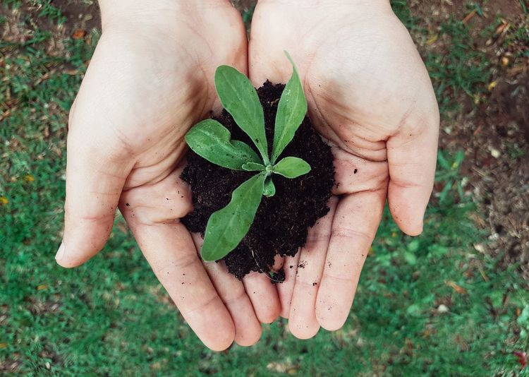 Garden Gardening Cultivating Agriculture Plants 🌱 Stem Plant Stem Save The Nature Earth Seedling Human Hand Leaf Women Flower Holding High Angle View Directly Above Palm Close-up Grass Clover Growing Young Plant Soil