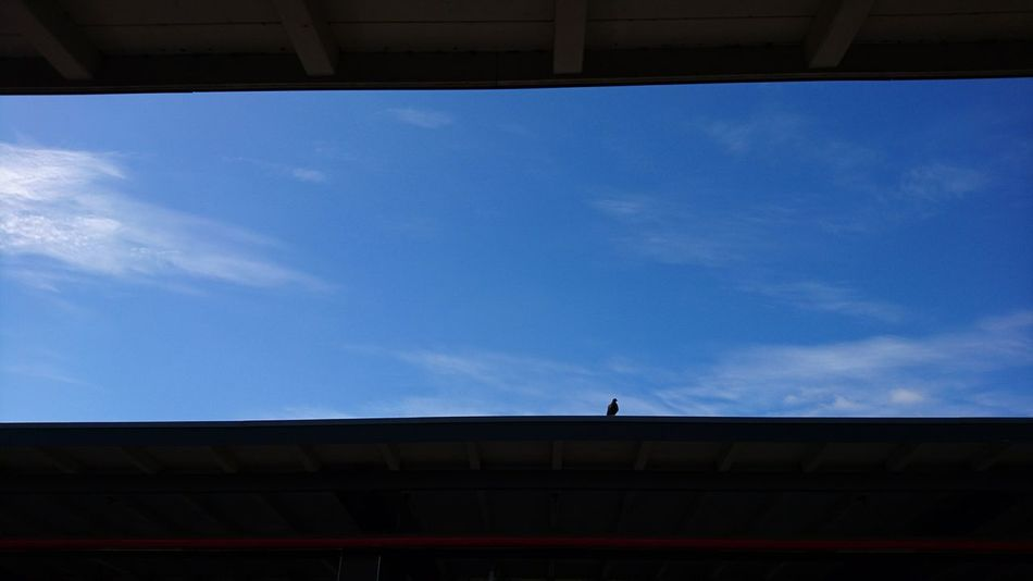 Lonely pigeon. · Hamburg Germany Hh Barmbek Train Station Roof On The Roof Pigeon Pigeons Birds Simplicity Minimalism Light And Shadow Black And Blue