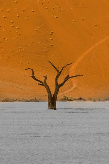 Dead tree in