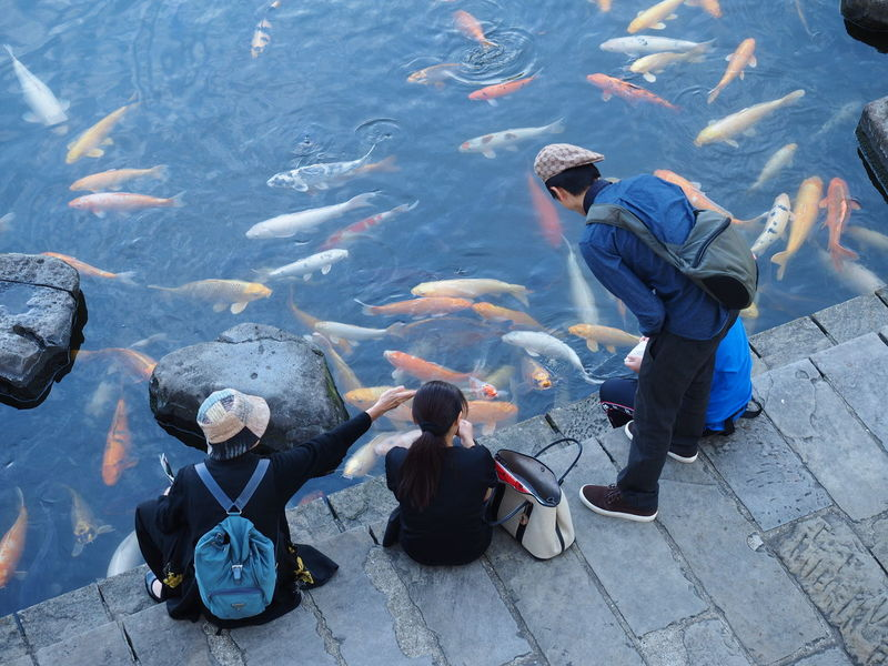 Feeding carps! (captured in Nagasaki, Japan.) Animals In Captivity Carp Carp Fish Feed  Feeding  Fish Group Nature Outdoors People Sitting Standing Swimming Watching Water