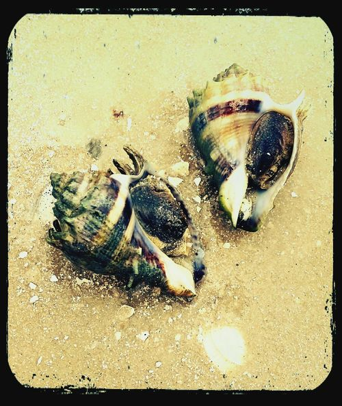 Check This Out Taking Photos Enjoying Life Seashells, Sand And Water Vacation Time
