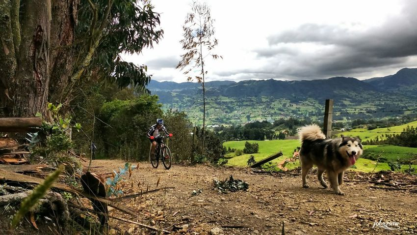 Sky Roadbikelife Mountainbike MTB ADVENTURE Dog MTB Biking Mtbpassion Domestic Animals One Animal Animal Themes Dogstagram Travel Destinations Landscape_photography Bikesaroundtheworld Runbike Dawn Of A New Day Mtb Love Roadbike Dawn Landscape Nature_collection Animal