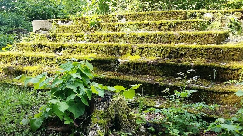 Light And Shadow Moss Color Abandoned Abandoned Places Old Ruins Old Stairs Stairs Mossy Mossy Stairs Mossy Ruins Sunlight Backgrounds Close-up Grass Green Color Plant