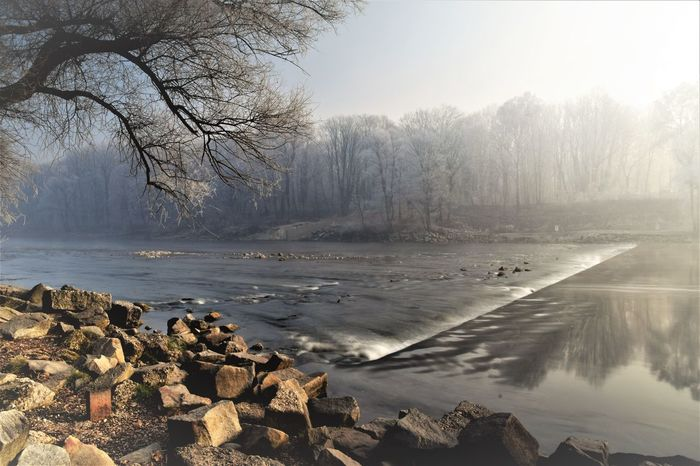 Bare Tree Beach Beauty In Nature Cold Temperature Day Fog Landscape Nature No People Outdoors Scenics Sea Sky Tranquil Scene Tranquility Tree Water
