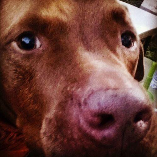 Close-up One Animal Animal Themes Dog Love
