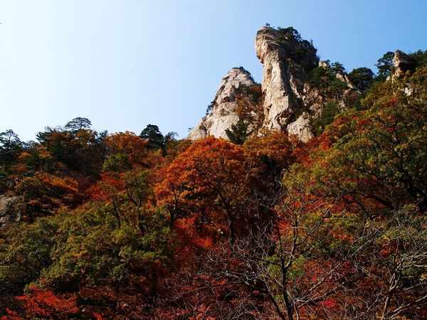 No People Nature Outdoors Tree Beauty In Nature Olympus Photography Olympus Multi Colored Mountin 설악산 단풍🍁 단풍