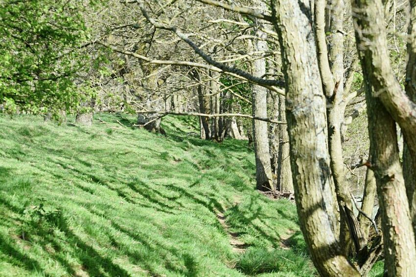 In the woods EyeEm Best Shots Justgoshoot Just Taking Pictures Myphoto Bellingham Northumberland Country Life Check This Out Mypic Wildlife & Nature Rivertyne Great Outdoors - 2016 EyeEm Awards