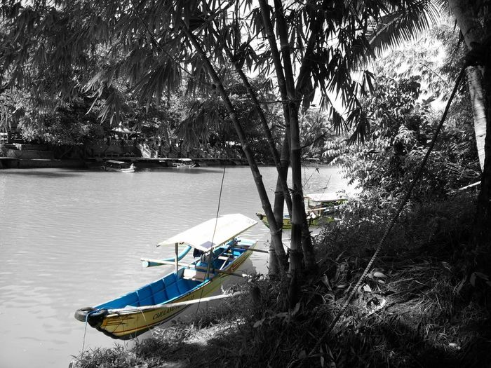 Boat moored on river by trees