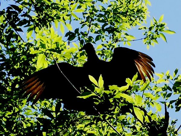 Lookingup Birds Nature Hugging A Tree EyeEm Nature Lover Eye4photography  EyeEm Best Shots Open Edit Silhouette Tree Sky