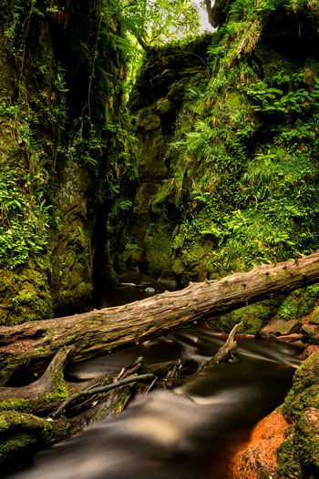 Beauty In Nature Day Devils Pulpit Flowing Flowing Water Forest Green Color Growth Land Log Moss Nature No People Outdoors Plant Scenics - Nature Tranquility Tree Tree Trunk Trunk Water Wood Wood - Material