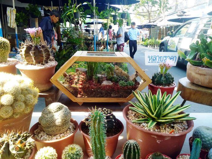 Plant shops People Bangkok Plant Shop Cactus Succulent JJ Market Day Garden Nature Mobliephotography