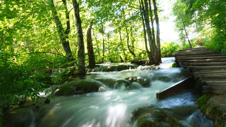 Plitvicer Seen Plitvice National Park Croatia Hrvatska Tree Water Waterfall Forest Motion Long Exposure River Sky Landscape Flowing Water Power In Nature Stream