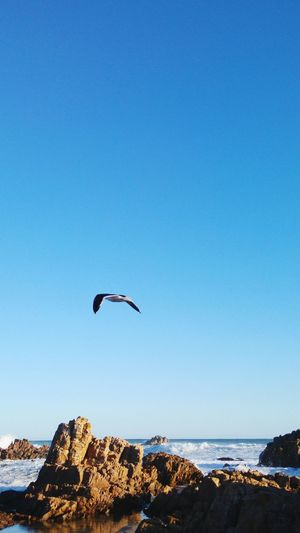 Bird Clear Sky Sea Horizon Over Water Water Flying Nature Beauty In Nature Shore Photography Eyeemphoto Nikonphotography Nikon Outdoors Summer Springtime From My Doorstep Natures Diversities South Africa