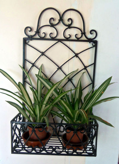 Classic Close-up Day Decor Flower Flower House Flower Porn French Growth Indoors  Leaf Mediterranean  No People Plant Potted Plant Wrought Iron