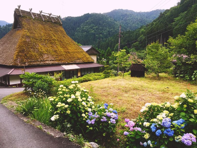 Architecture Flower Building Exterior Nature Tree Built Structure Beauty In Nature Mountain House Plant Tranquil Scene Growth Thatched Roof Village Idyllic Green Color No People Outdoors Scenics Sky かやぶきの里 茅葺屋根 京都
