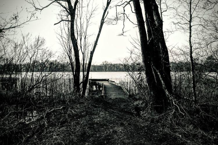 Lake Lakeshore
