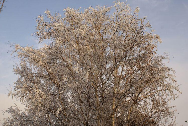 Winter Silver