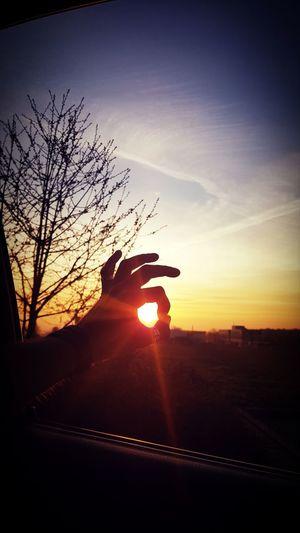 Unforgettable Moment Unforgettable Sunlight Hand Sonnenuntergang Unforgettable ♥ Tree Sunset Silhouette Sky Landscape
