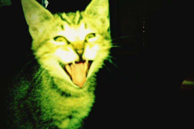 Yawn Cat wildstyle