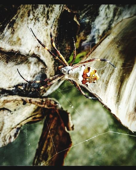 Spider. Fashion Stories Spider Web Spider Close-up Insect Web One Animal No People Shades Of Winter