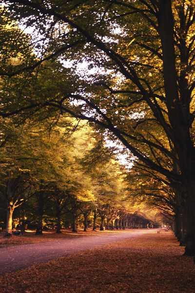 Park Alley Trees Autumnal Mood Relaxing Autumn Colors Autumn Collection EyeEm Nature Lover Nature Photography Getting Inspired
