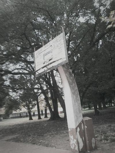 Blancoynegro Blanco & Negro  Black & White Blackandwhite Life Basketball Rudimental  Vintage