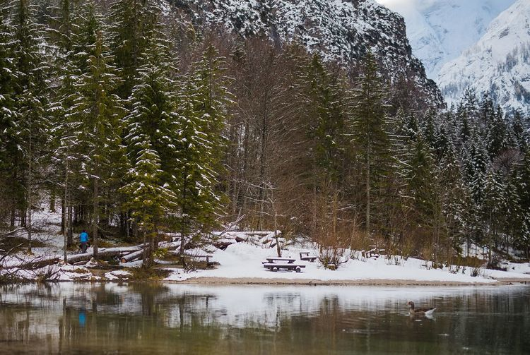 View of pine trees in lake during winter