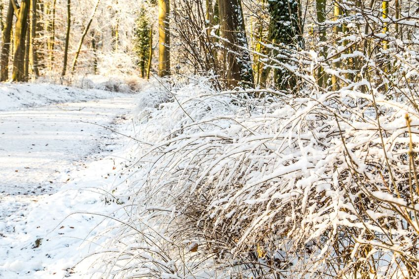 Beauty In Nature Bois De La Cambre Cold Temperature Day Forest Grass Landscape Nature No People Outdoors Scenics Snow Tranquil Scene Tranquility Tree Tree Trunk Weather Winter