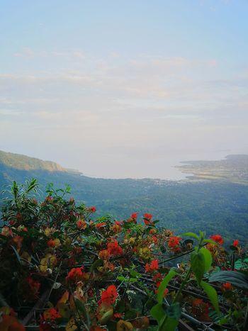 flowers over looking the taal lake. Red Poppy Sea Leaf Blue In Bloom Blooming Wildflower