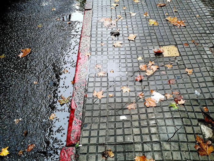 Fallen leaves on footpath