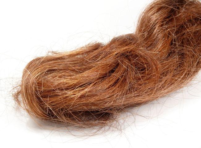 Beautiful Braun Dichtes Haar Dickes Haar Echthaar Fashion Freigestellt Gesund Haare Hairs Hairstyle Head And Shoulders Hornfäden Isoliert Menschlich Pferdeschwanz Rötlich