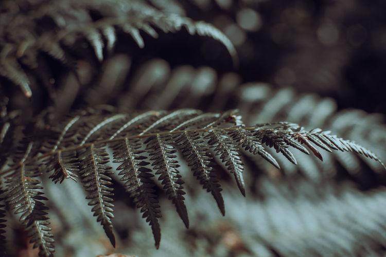 Macro shot of fern