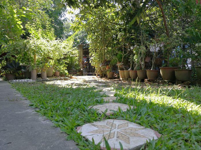 Mom's Yard