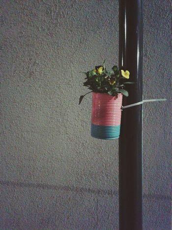 Flowers Street Streetphotography Lovely