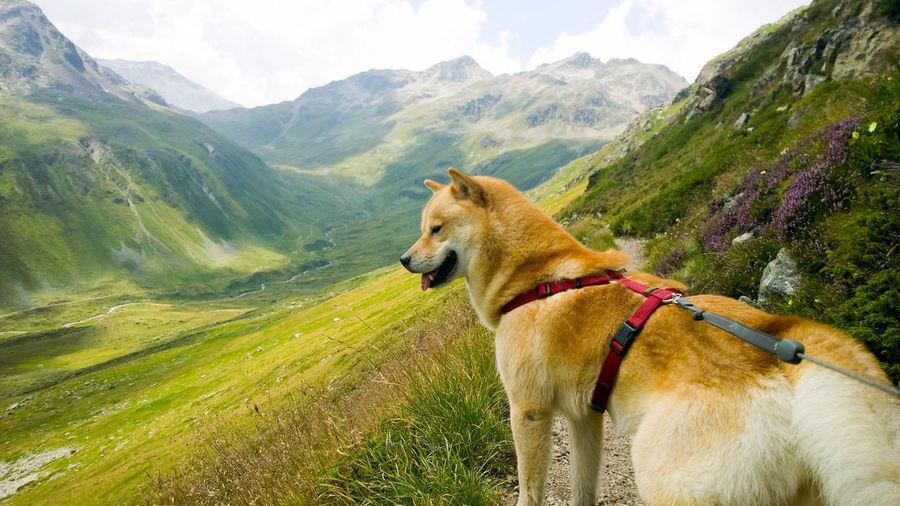 Dog On Countryside Landscape