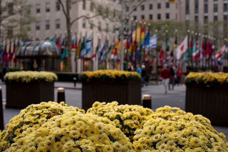 Flowers in rockefeller center Plaza Flags Yellow Flowers Market Close-up Day No People Multi Colored
