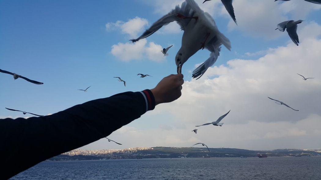 Q Yemeksaati Food Mealtimes Simit Sea Marmara Istanbul Bursa Deniz Turkey Istanbul  Blue Bird Puffin Cold Waves Audi Audi R8 Audiquattro