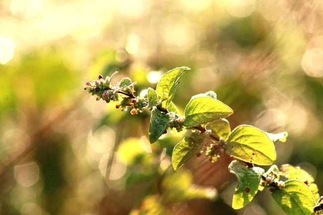 berries are ripe. Berries Flower Branch Leaf Plant Part Sunlight Summer Flower Head Close-up Landscape Plant