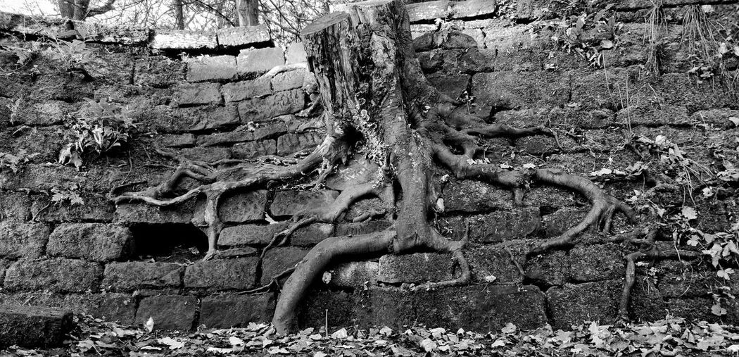 Power In Nature Monochrome Blackandwhite Walll Tree Abandoned Backgrounds Full Frame Pattern Wall Worn Out Decline