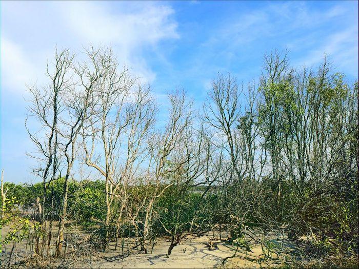 Paint Edit Nature Sky Growth No People Tree Freshness Huawei P9 Leica Beauty In Nature Sundayholidays Beach