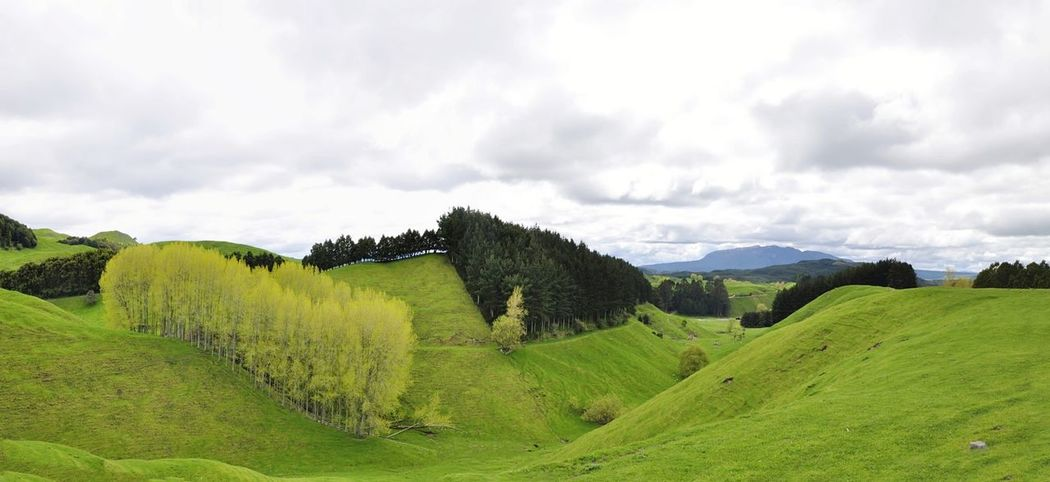 Landscape Forest Rural Scene Outdoors Tree Nature Beauty In Nature New Zealand EyeEmNewHere
